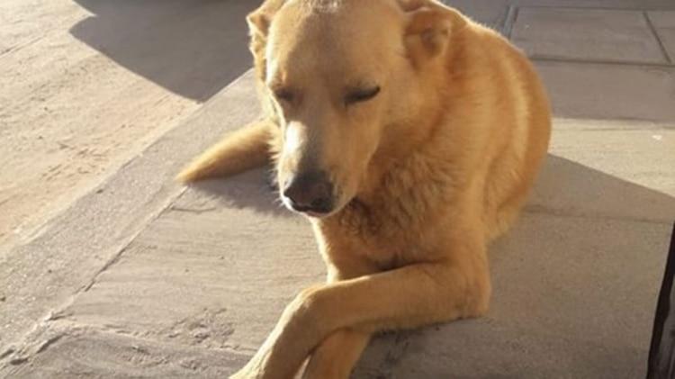 perro-Rubio-4