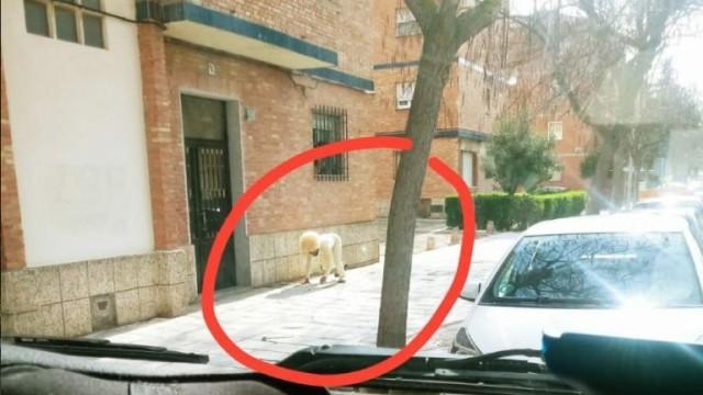 Perro-españa-web-768x432