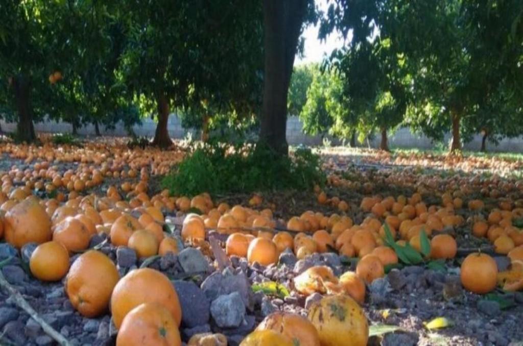 naranjas-en-el-suelo-750x375